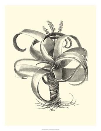 B&W Besler Aloe by Basilius Besler art print