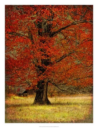 Autumn Oak II by Danny Head art print
