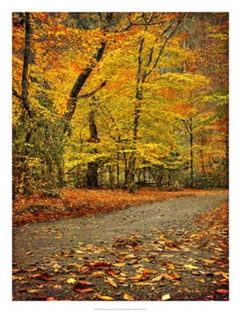 Path through Autumn by Danny Head art print