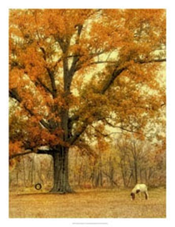 Autumn Grazing by Danny Head art print