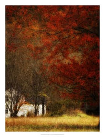 Beyond October's Maple by Danny Head art print