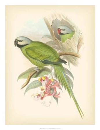 Birds of the Tropics II by John Gould art print