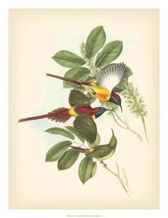 Birds of the Tropics III by John Gould art print