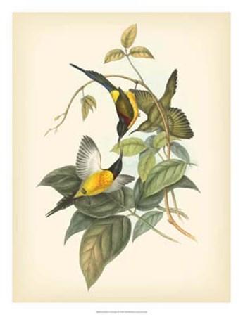 Birds of the Tropics IV by John Gould art print