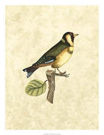 Birds I by John Selby art print