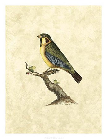Birds II by John Selby art print
