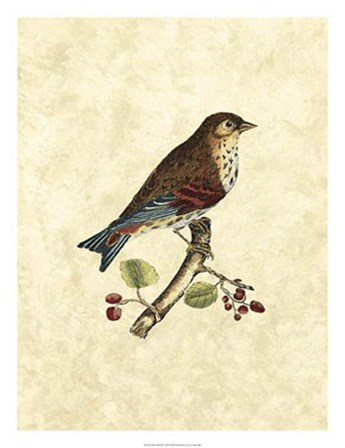 Birds III by John Selby art print
