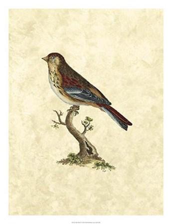 Birds IV by John Selby art print