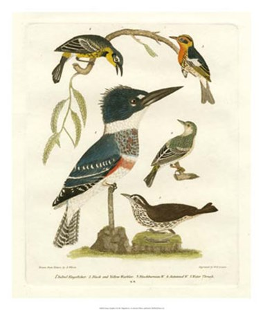 Antique Kingfisher I by Alexander Wilson art print