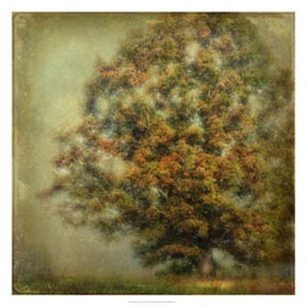 Autumn's Dream by Danny Head art print