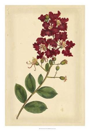 Floral Varieties II by Edward S. Curtis art print