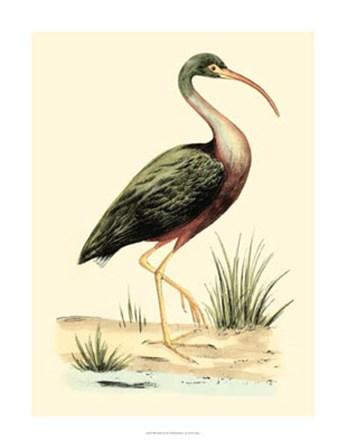 Water Birds I by H.l. Meyer art print