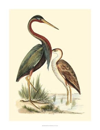 Water Birds III by H.l. Meyer art print