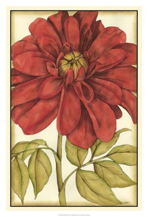 Ruby Blooms III by Jennifer Goldberger art print