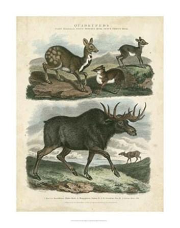 Deer & Moose by Sydenham Edwards art print