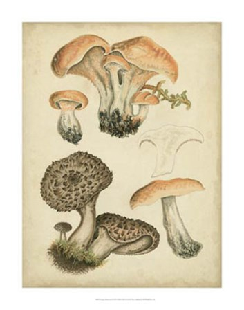 Antique Mushrooms I by Hansjorg Furrer art print