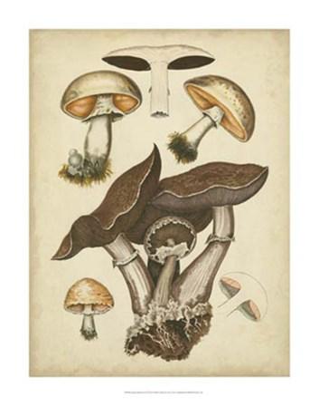 Antique Mushrooms II by Hansjorg Furrer art print