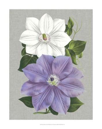 Clematis Blooms I by Pieter De Pannemaeker art print
