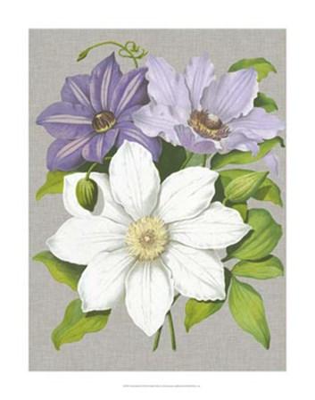 Clematis Blooms II by Pieter De Pannemaeker art print