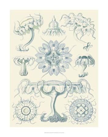 Sophisticated Sealife III by Ernst Haeckel art print