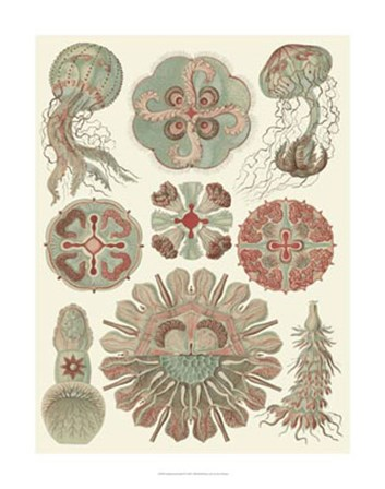 Sophisticated Sealife IV by Ernst Haeckel art print