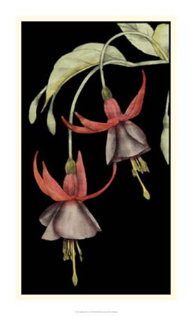 Graphic Fuchsia V by Jennifer Goldberger art print