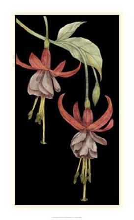 Graphic Fuchsia VI by Jennifer Goldberger art print