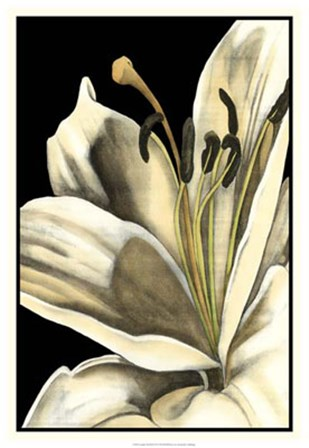Graphic Lily III by Jennifer Goldberger art print