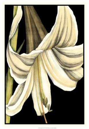 Graphic Lily IV by Jennifer Goldberger art print
