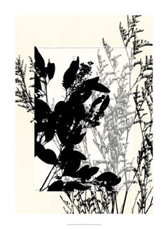 Translucent Wildflowers IX by Jennifer Goldberger art print