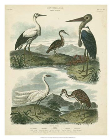 Heron & Crane Species I by Sydenham Edwards art print