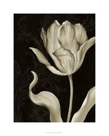 Classical Tulip II by Ethan Harper art print