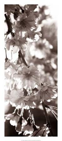 Blossom Triptych II by Renee Stramel art print