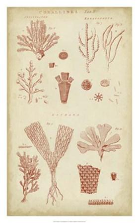 Coralline I by C.E. Chambers art print