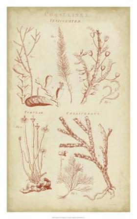 Coralline II by C.E. Chambers art print