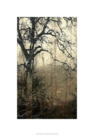 Wooded Solace I by Jennifer Goldberger art print