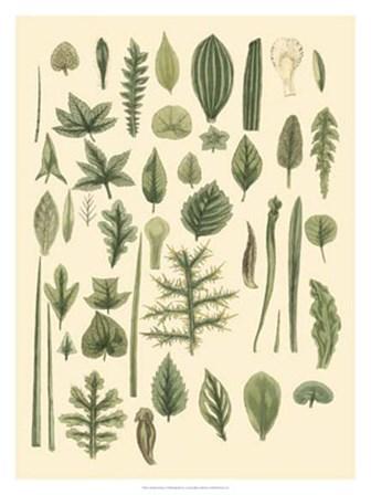 Abundant Foliage I by John Miller art print