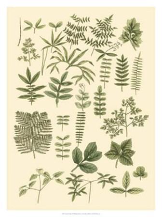 Abundant Foliage II by John Miller art print