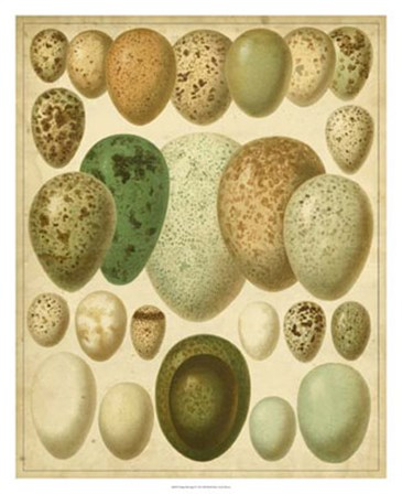 Vintage Bird Eggs II by Bert Meyers art print