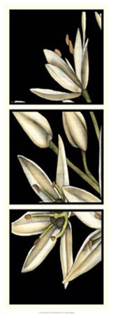 Graphic Lily I by Jennifer Goldberger art print