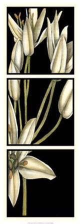 Graphic Lily II by Jennifer Goldberger art print