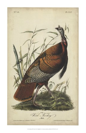 Audubon Wild Turkey by John James Audubon art print