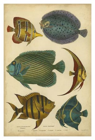 Non-Emb. Goldsmith's Spinous Fishes by Trace Goldsmith art print