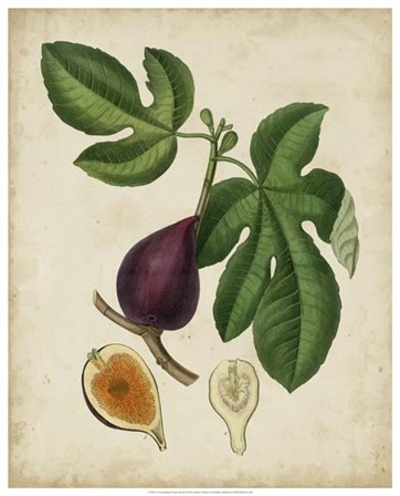 Non-Embellished Antique Fig Tree by Weddell art print