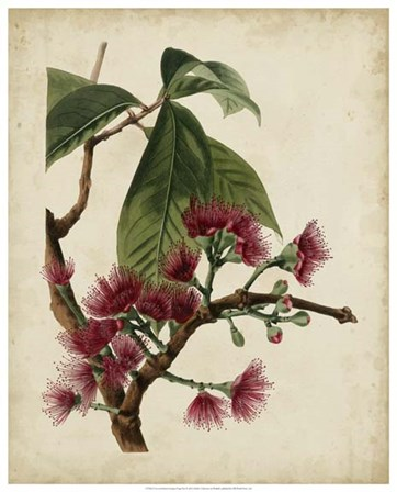 Non-Embellished Antique Fringe Tree by Weddell art print