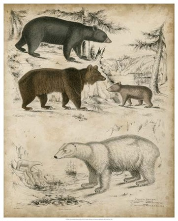 Non-Embellished Species of Bear art print