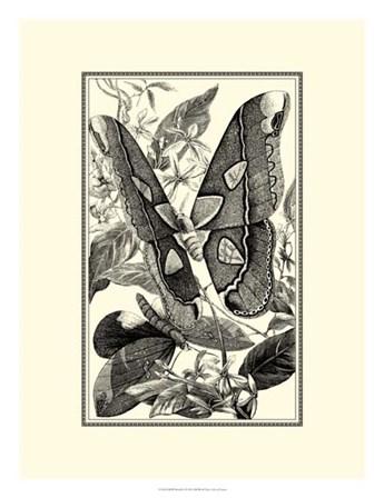 B&W Butterfly II by G. Pearson art print