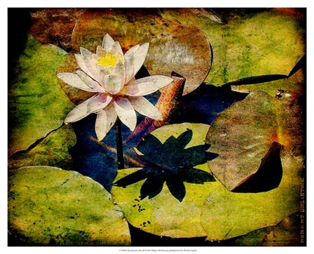 Kenilworth Lilies III by Robert McClintock art print