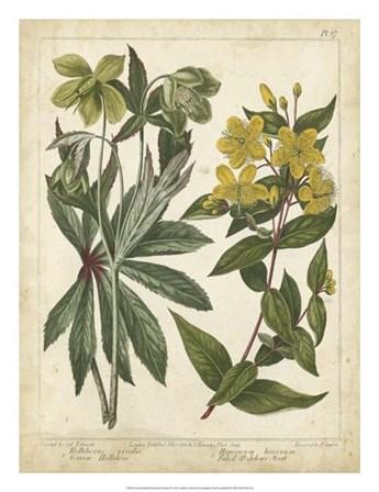 Non-Embellish Enchanted Garden III by Sydenham Edwards art print