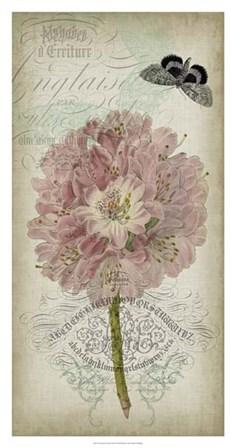 Cartouche & Floral II by Jennifer Goldberger art print